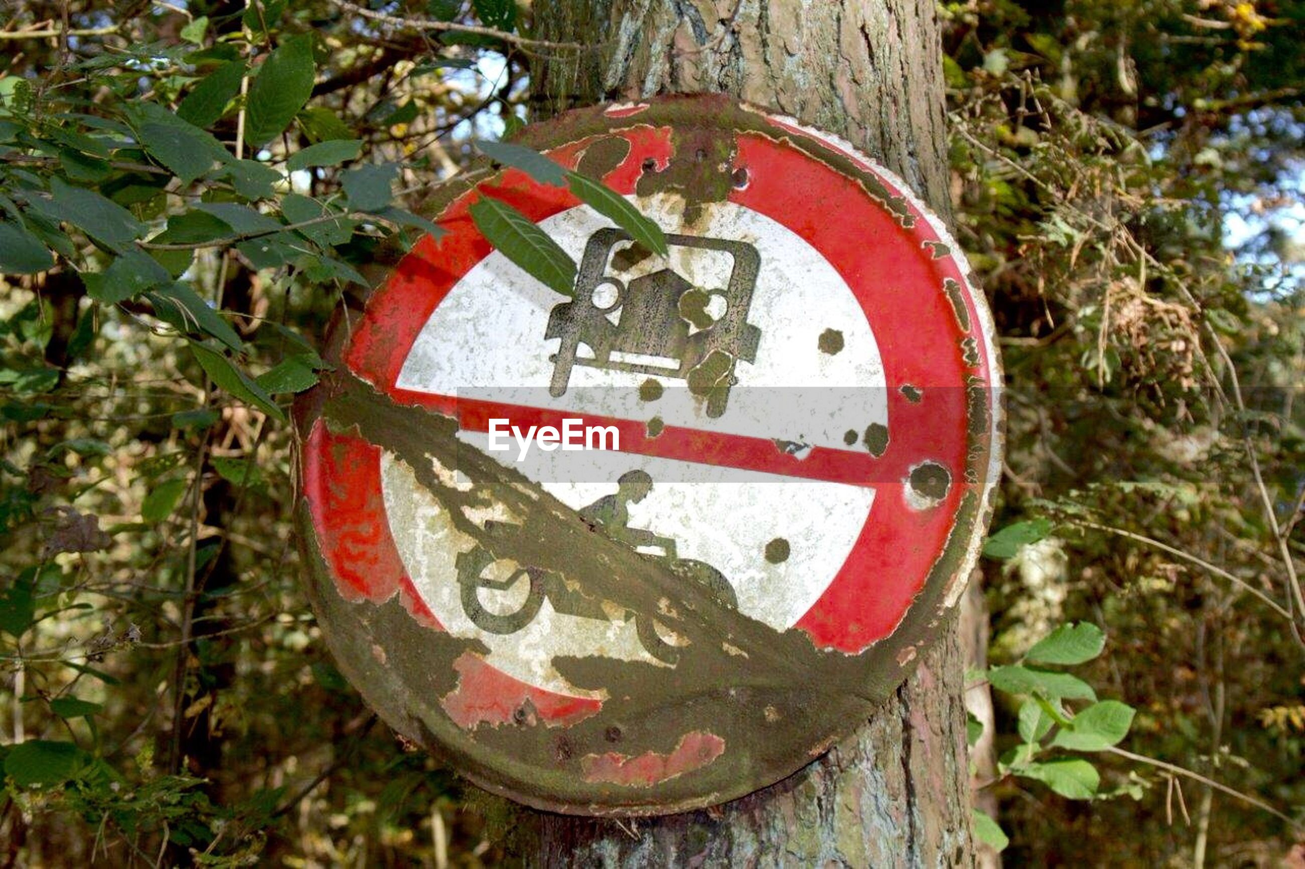 Close-up of weathered road sign on tree trunk