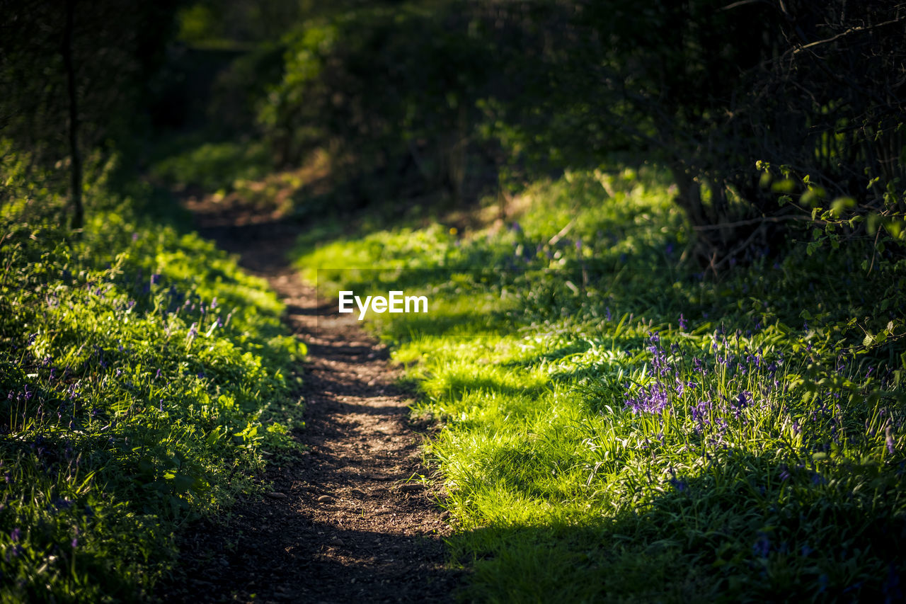 WALKWAY IN GRASS