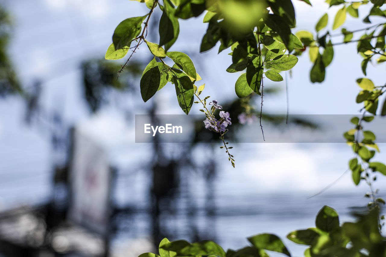 plant, growth, beauty in nature, leaf, plant part, freshness, nature, focus on foreground, day, flower, close-up, flowering plant, no people, vulnerability, fragility, tree, green color, outdoors, branch, food, flower head