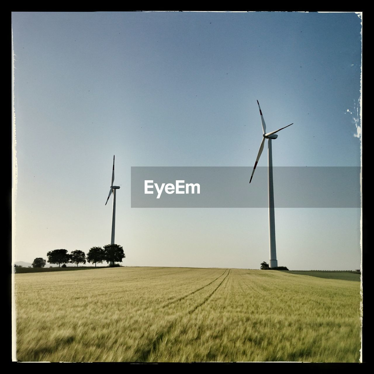 field, wind power, wind turbine, agriculture, rural scene, farm, alternative energy, fuel and power generation, crop, renewable energy, windmill, landscape, technology, nature, day, outdoors, industrial windmill, no people, sky, clear sky, cereal plant, growth, beauty in nature, scenics, grass, wheat