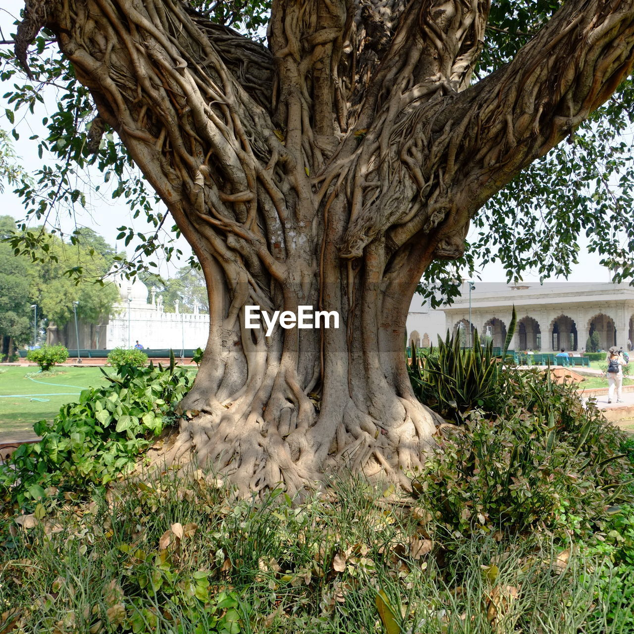 tree, growth, tree trunk, plant, nature, root, day, palm tree, beauty in nature, outdoors, no people, grass