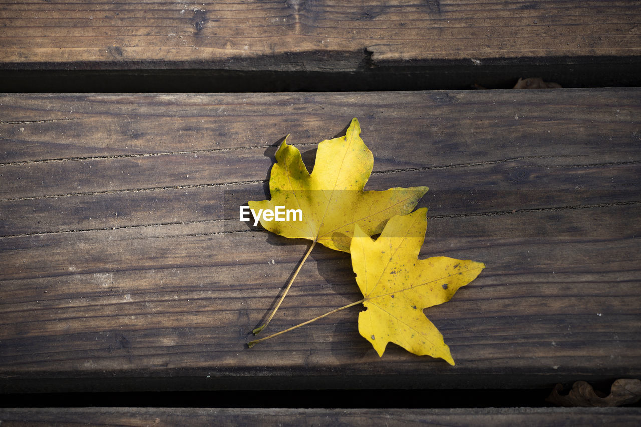 yellow, wood - material, table, still life, plant part, leaf, close-up, autumn, no people, high angle view, change, dry, nature, directly above, indoors, fragility, vulnerability, maple leaf, leaves