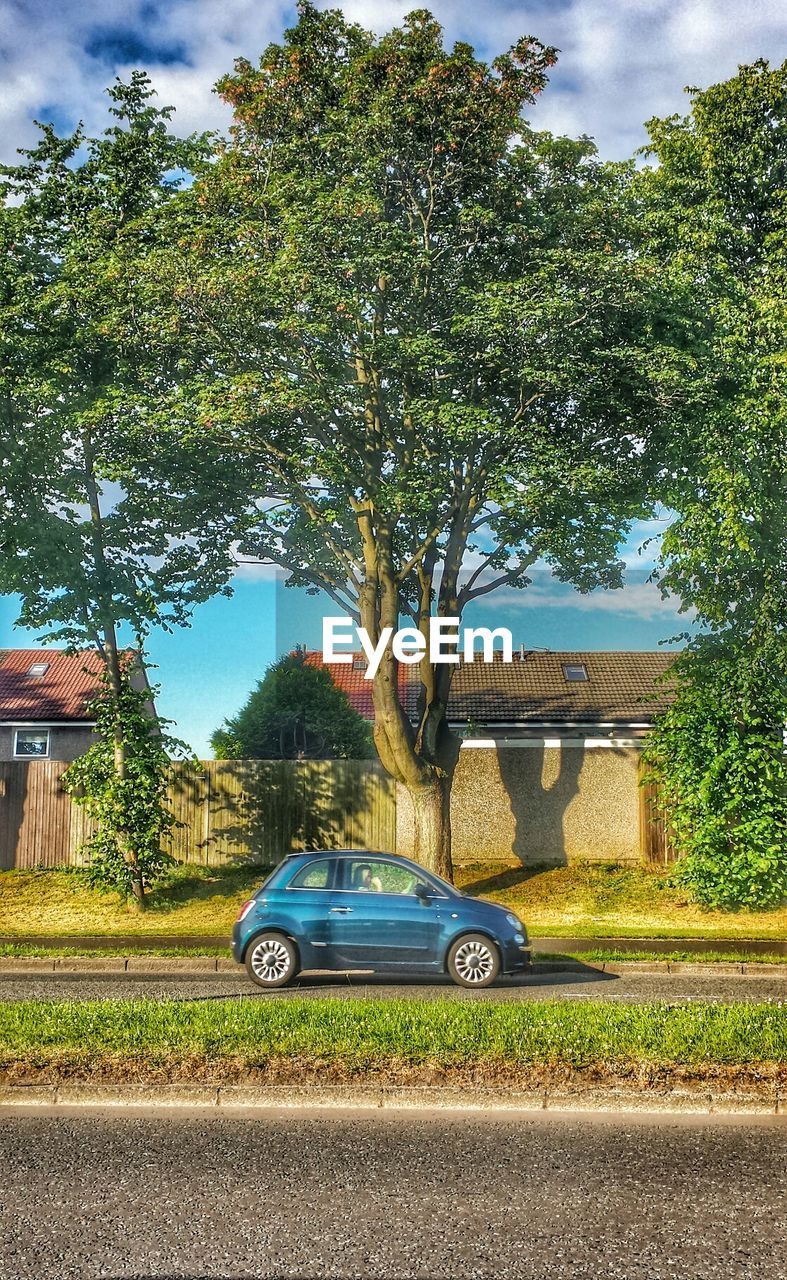tree, car, transportation, architecture, day, built structure, growth, building exterior, outdoors, no people, sky, grass