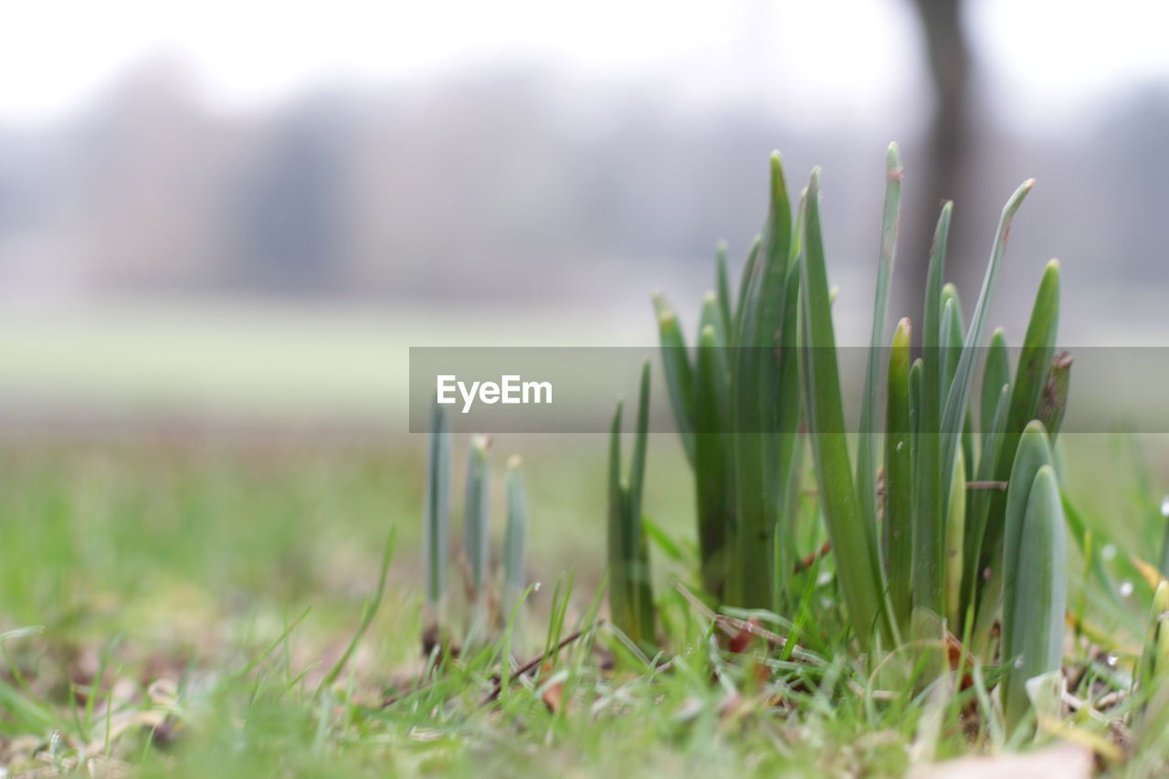 green color, selective focus, growth, grass, nature, day, outdoors, focus on foreground, no people, beauty in nature, close-up, freshness