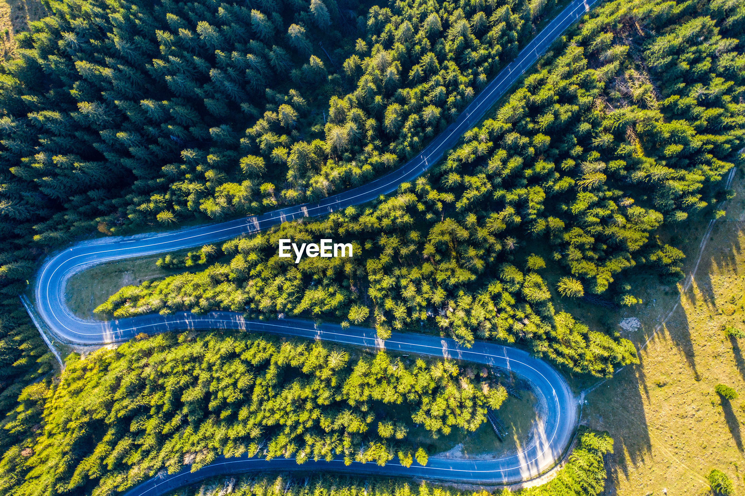 Aerial view of road amidst trees on land