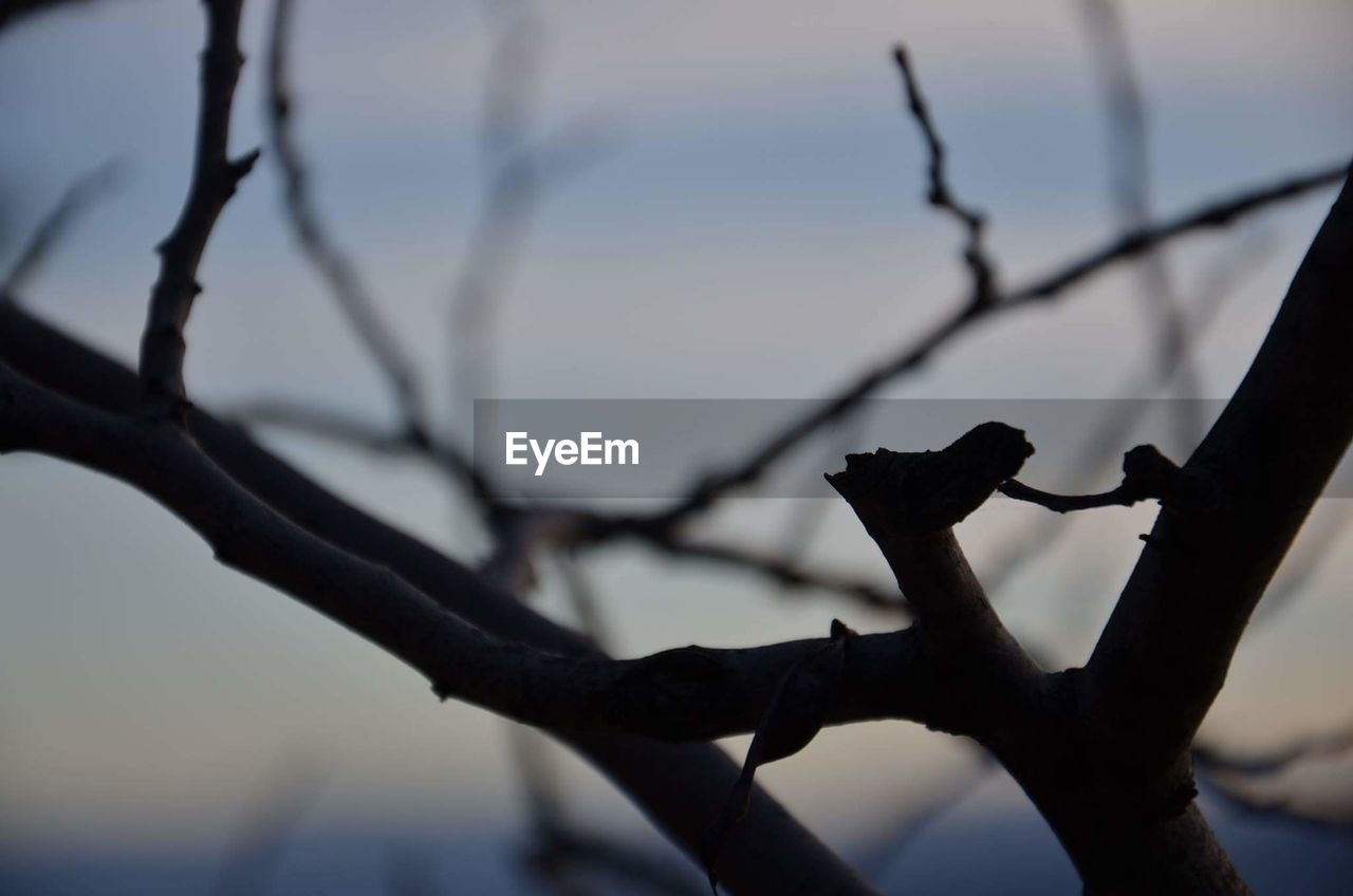 focus on foreground, branch, tree, day, outdoors, no people, close-up, nature, beauty in nature, sky