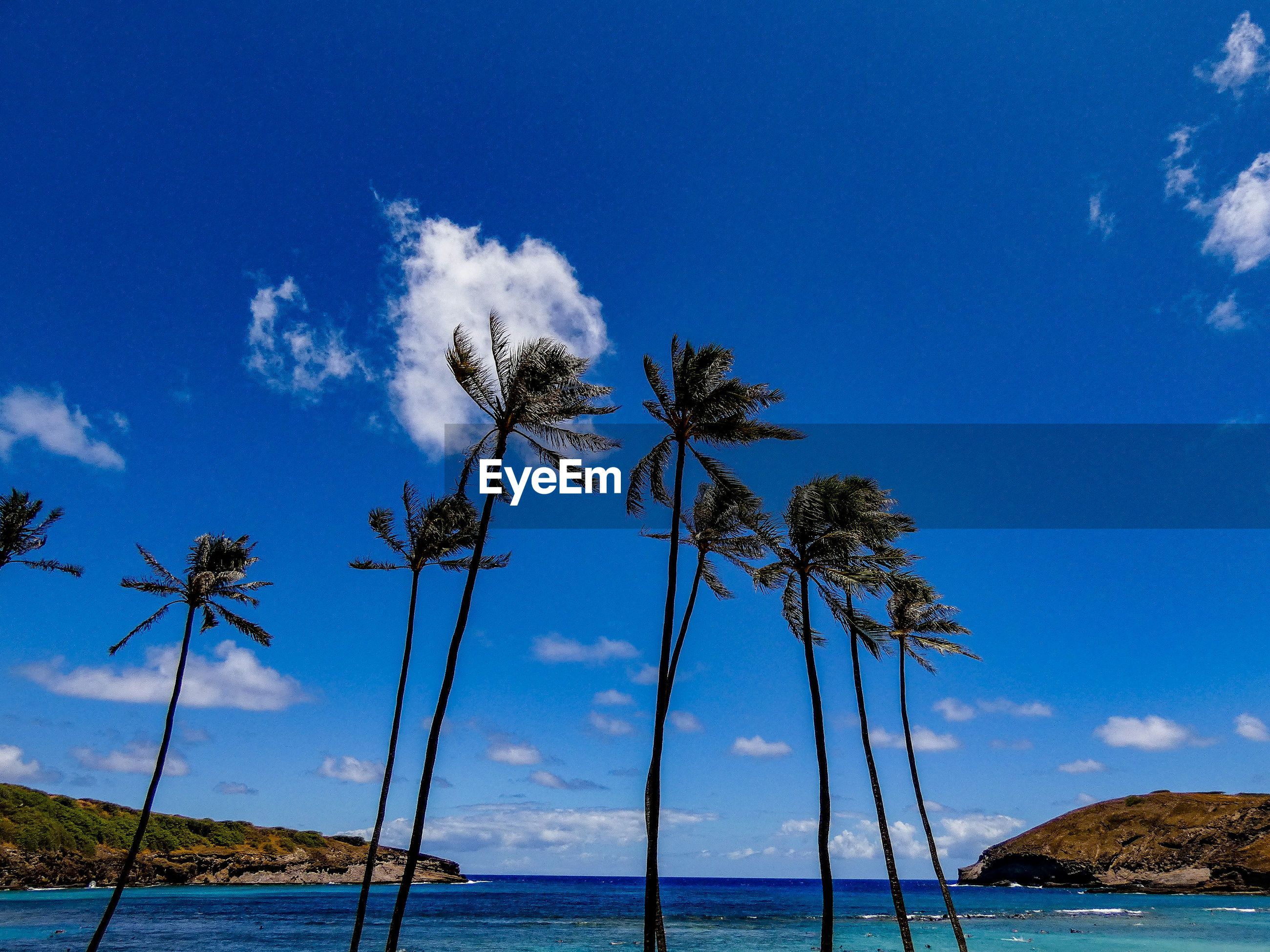 COCONUT PALM TREES ON BEACH AGAINST BLUE SKY
