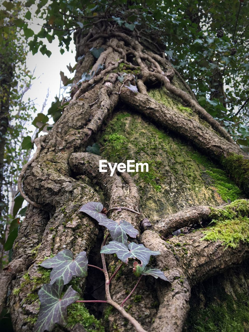 tree, tree trunk, day, low angle view, outdoors, nature, growth, no people, branch, sculpture, statue, forest, beauty in nature, dead tree, close-up