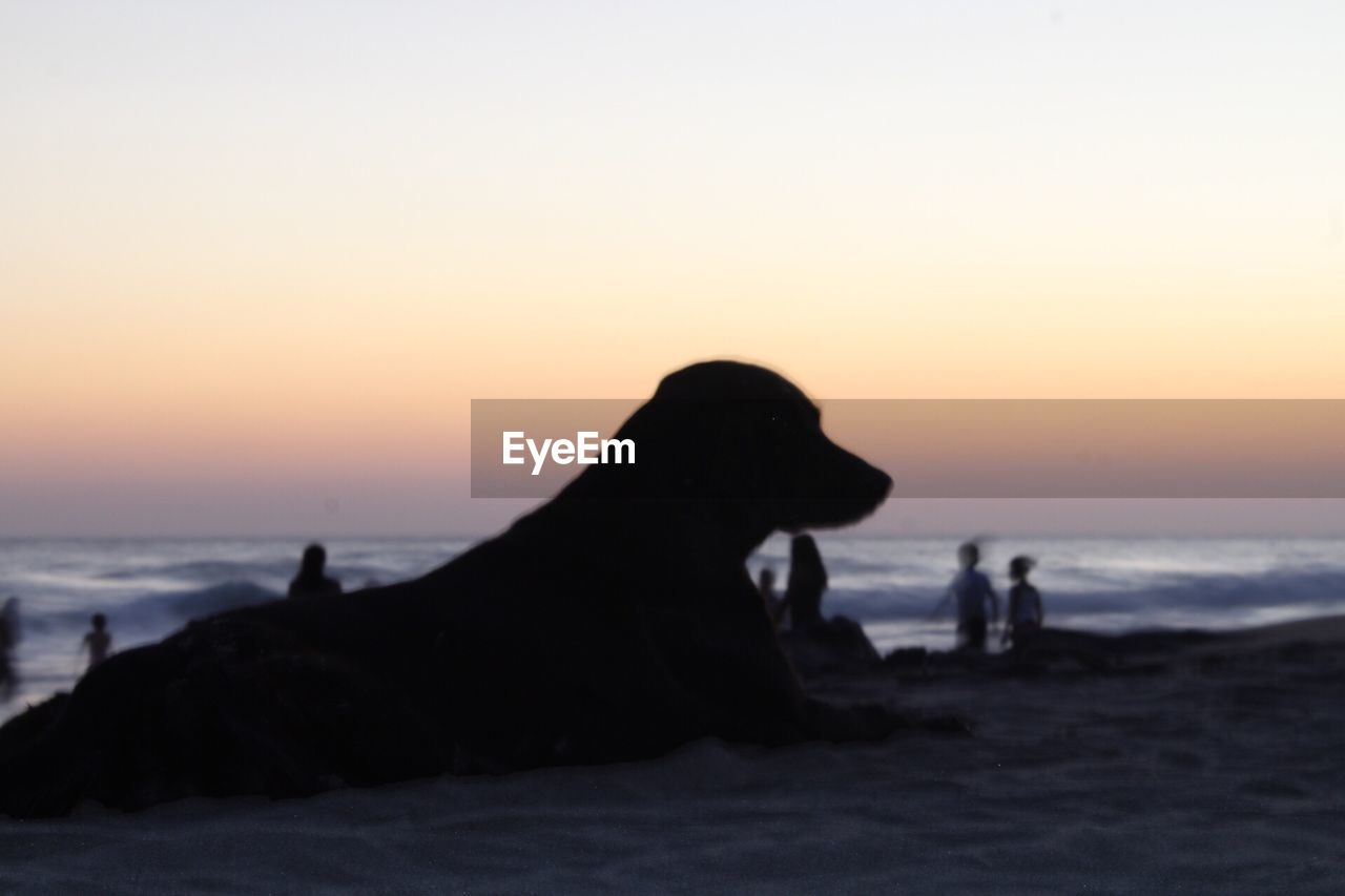sunset, sea, silhouette, nature, water, beach, beauty in nature, horizon over water, scenics, rock - object, sky, tranquil scene, outdoors, tranquility, sand, one animal, animal themes, wave, no people, clear sky, mammal, day