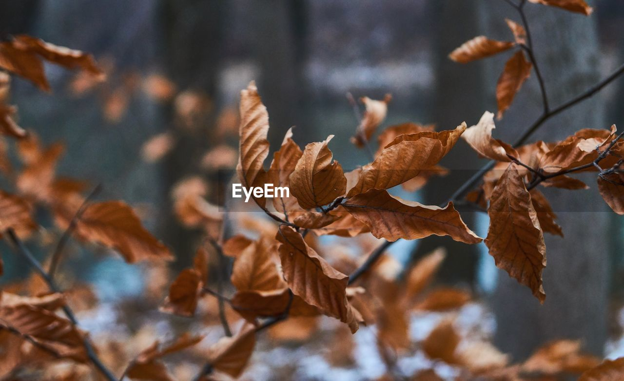 leaf, plant part, close-up, plant, focus on foreground, leaves, autumn, nature, no people, beauty in nature, day, dry, growth, brown, tranquility, selective focus, vulnerability, change, fragility, tree, outdoors, dried, wilted plant, natural condition, autumn collection