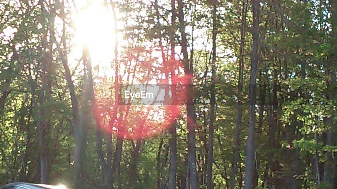 tree, sunlight, sunbeam, nature, forest, tranquility, lens flare, growth, sun, day, no people, woodland, outdoors, beauty in nature, summer, red, tree trunk, scenics, sky