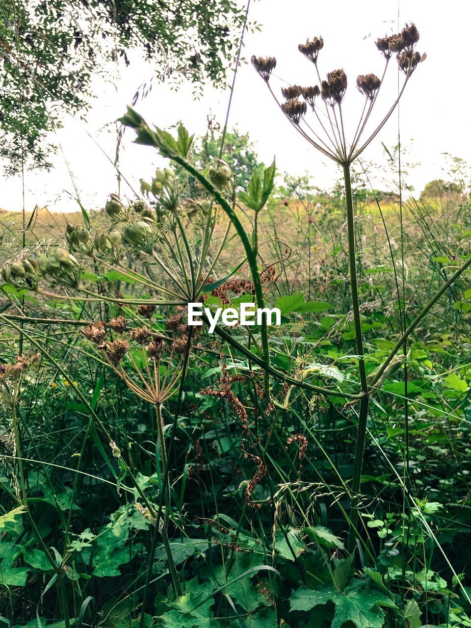 growth, nature, plant, green color, no people, day, outdoors, beauty in nature, tree, leaf, fragility, grass, flower, freshness, sky, close-up