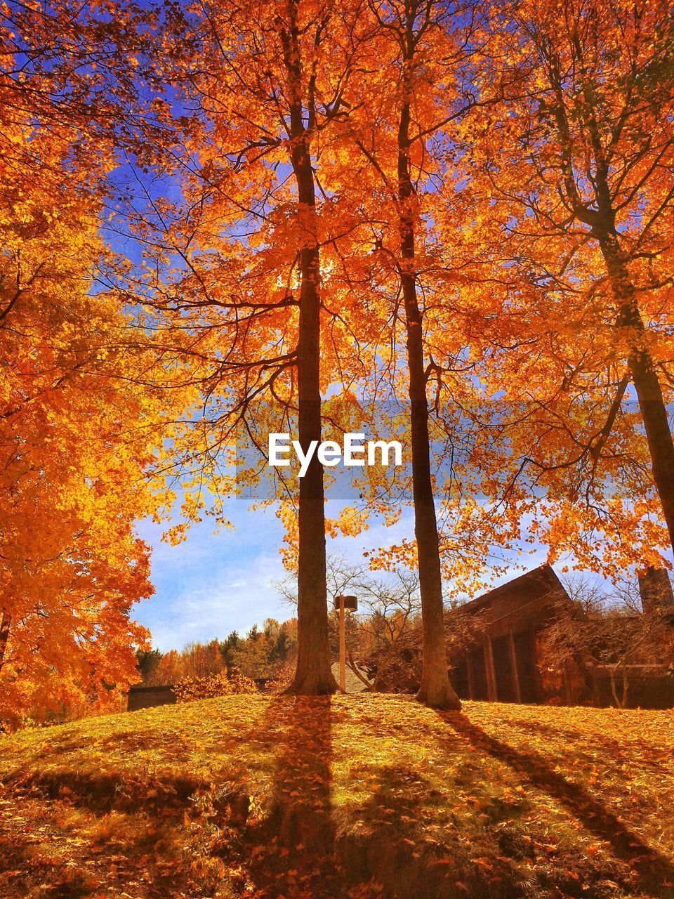 Low Angle View Of Autumn Trees On Sunny Day