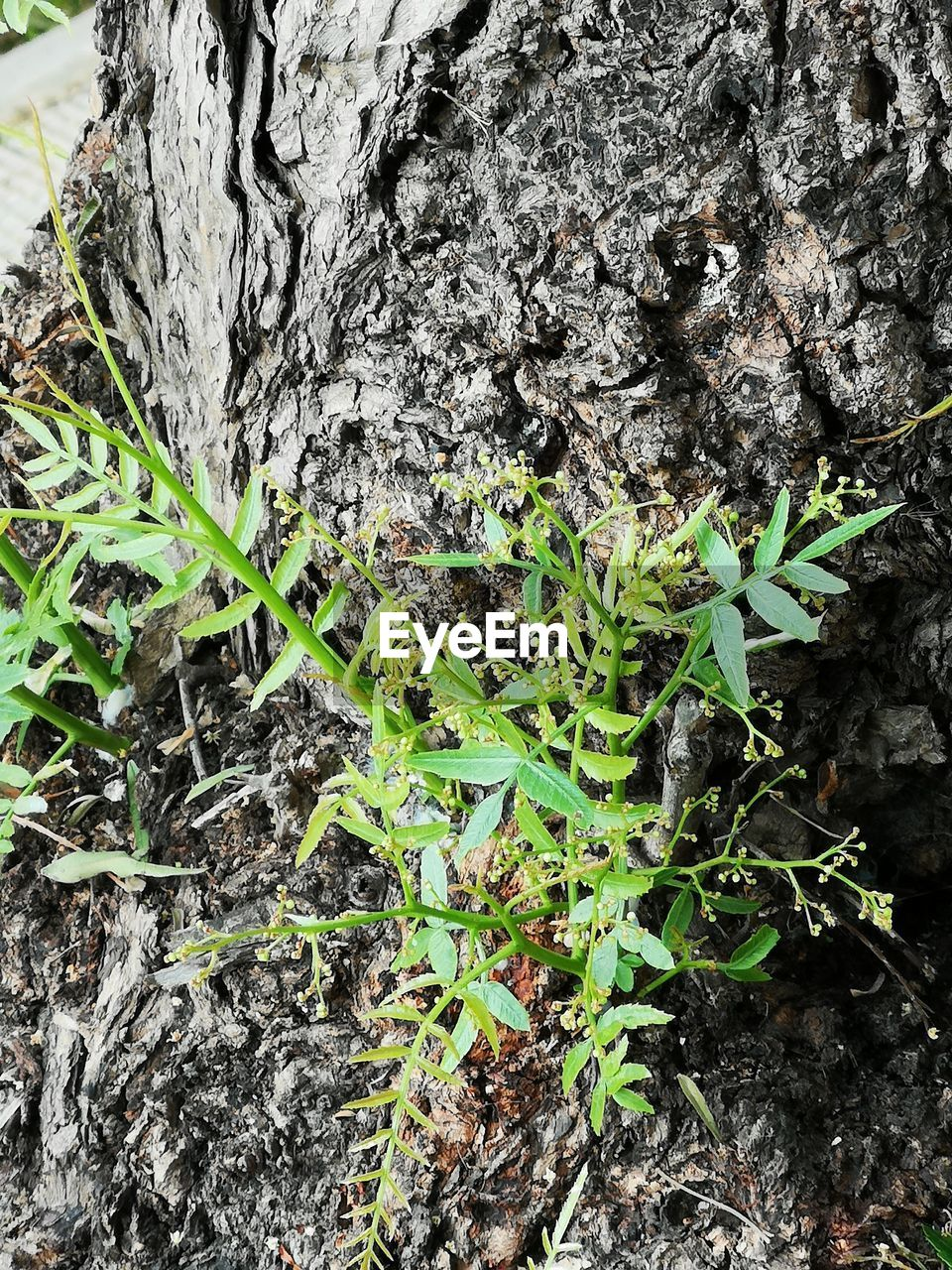 growth, plant, nature, tree trunk, trunk, plant part, leaf, beauty in nature, no people, day, green color, close-up, tree, outdoors, textured, field, tranquility, dirt, rough, land, bark, lichen