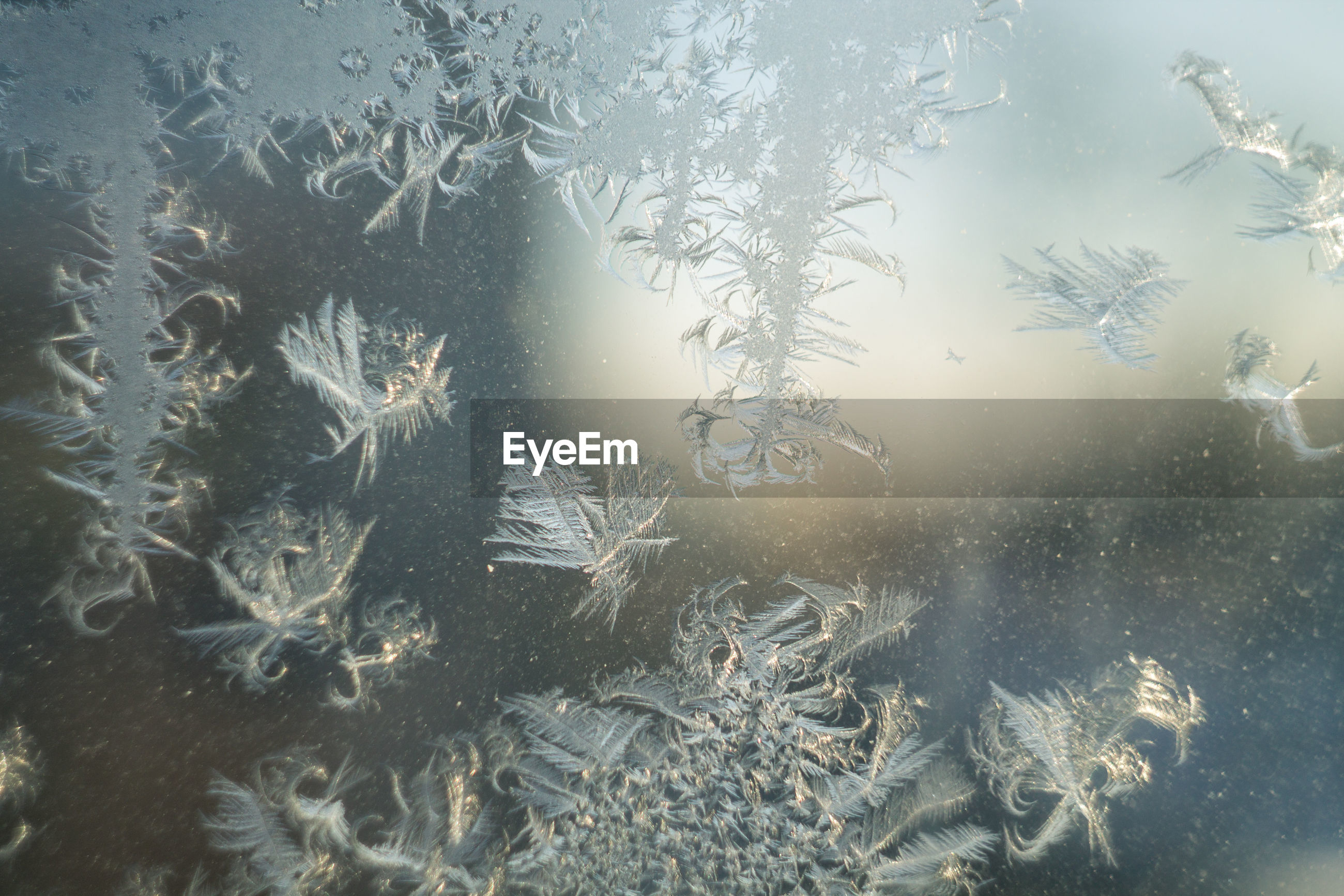 Close-up of snowflakes on glass