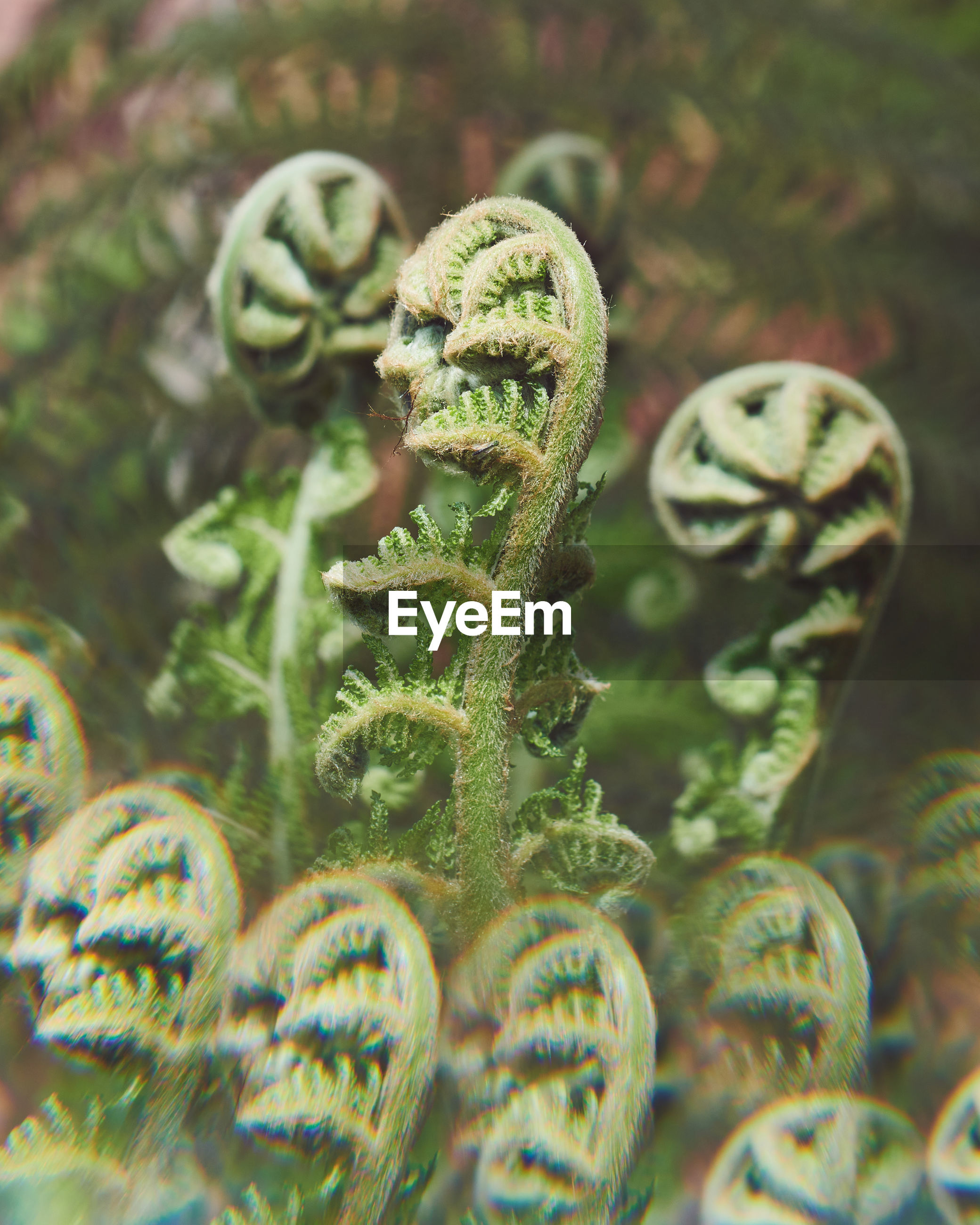 CLOSE-UP OF FERN ON METAL