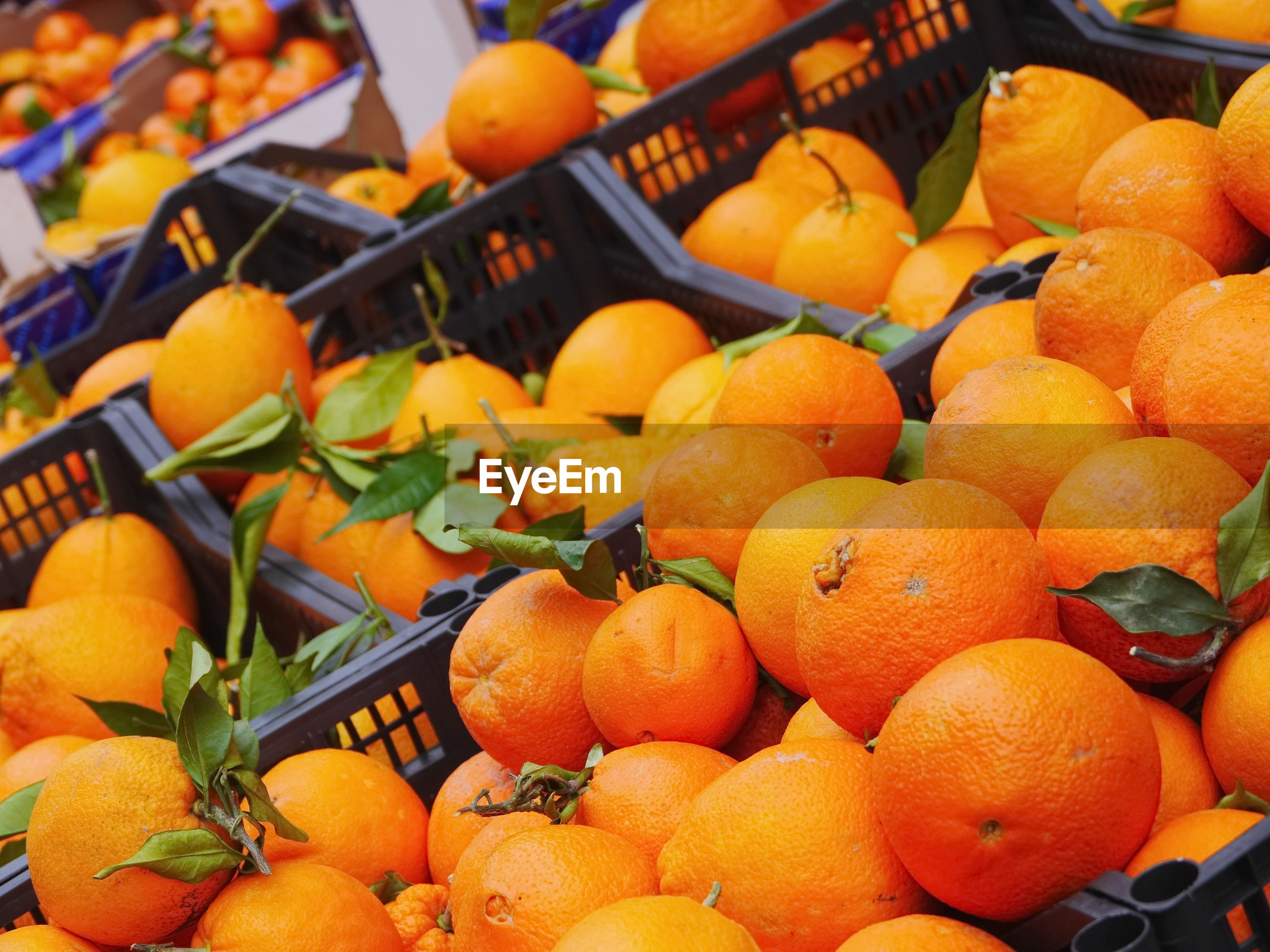 Close-up of oranges in crates for sale in market