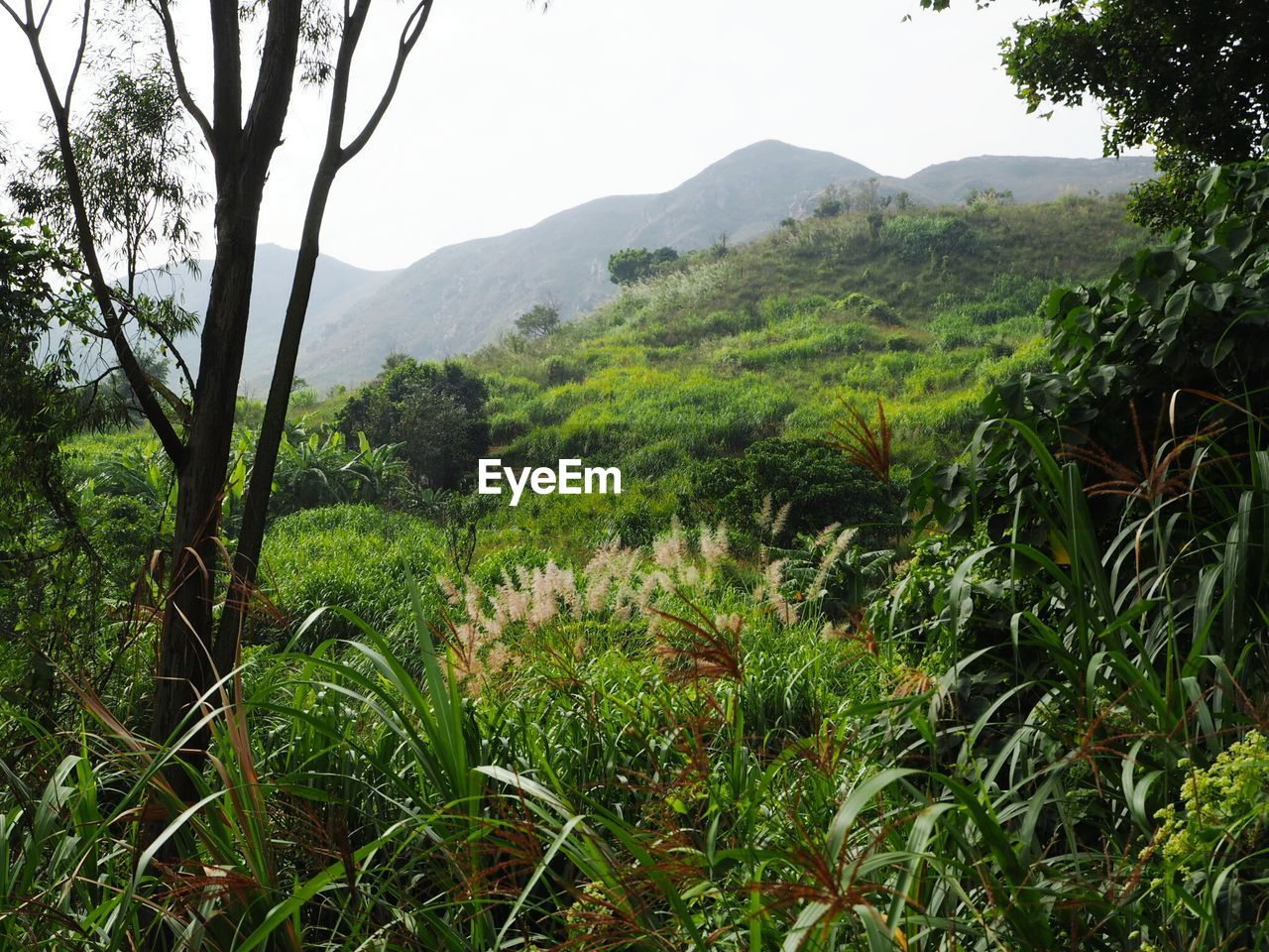 nature, mountain, growth, beauty in nature, scenics, tranquility, tranquil scene, landscape, tree, no people, outdoors, day, plant, lush foliage, green color, field, lush, mountain range, forest, grass, freshness, sky