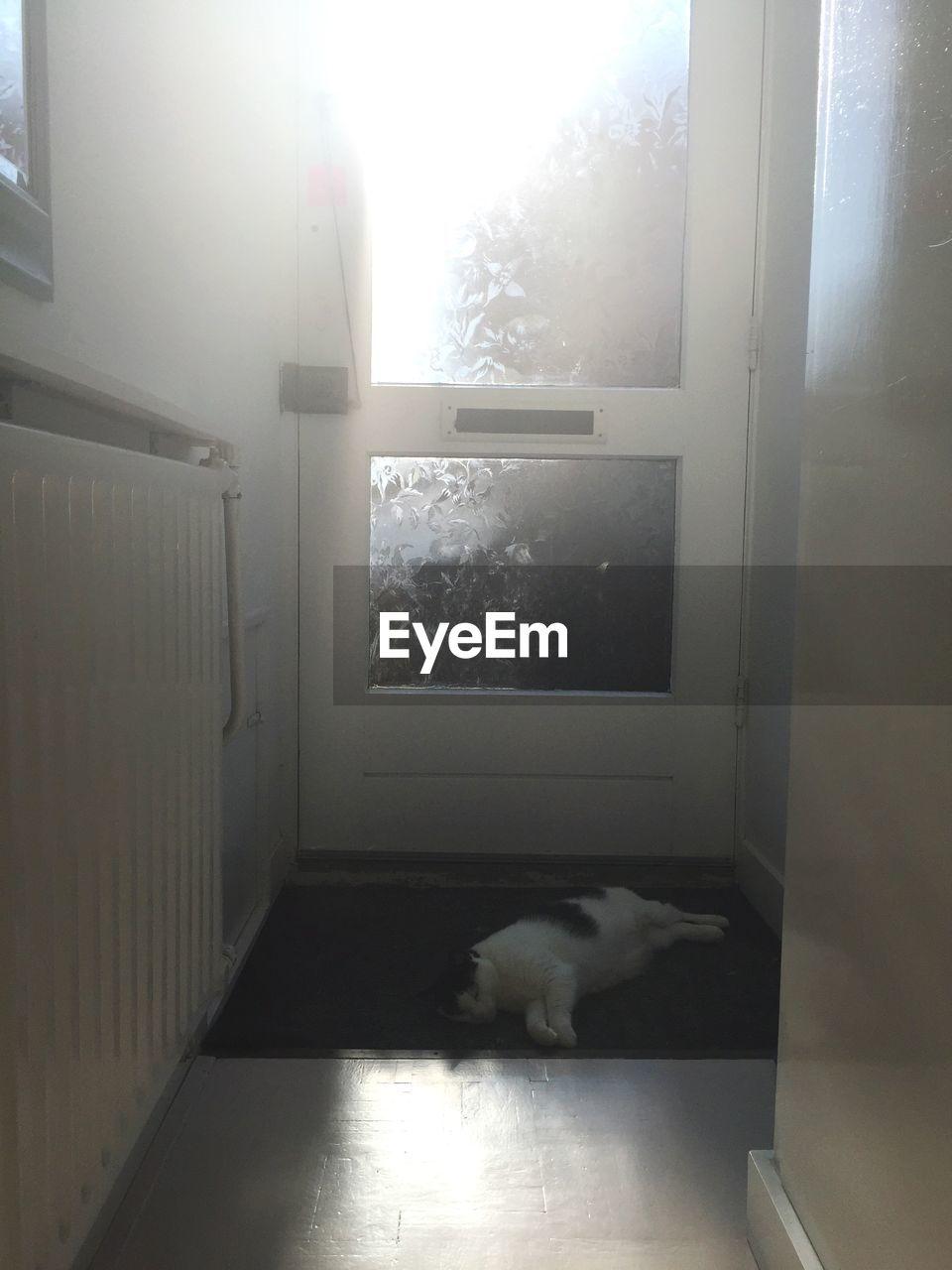 Cat Relaxing By Door At Home