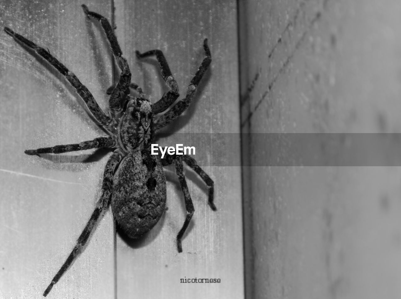 animal themes, one animal, animals in the wild, spider, animal wildlife, insect, close-up, day, no people, outdoors, nature