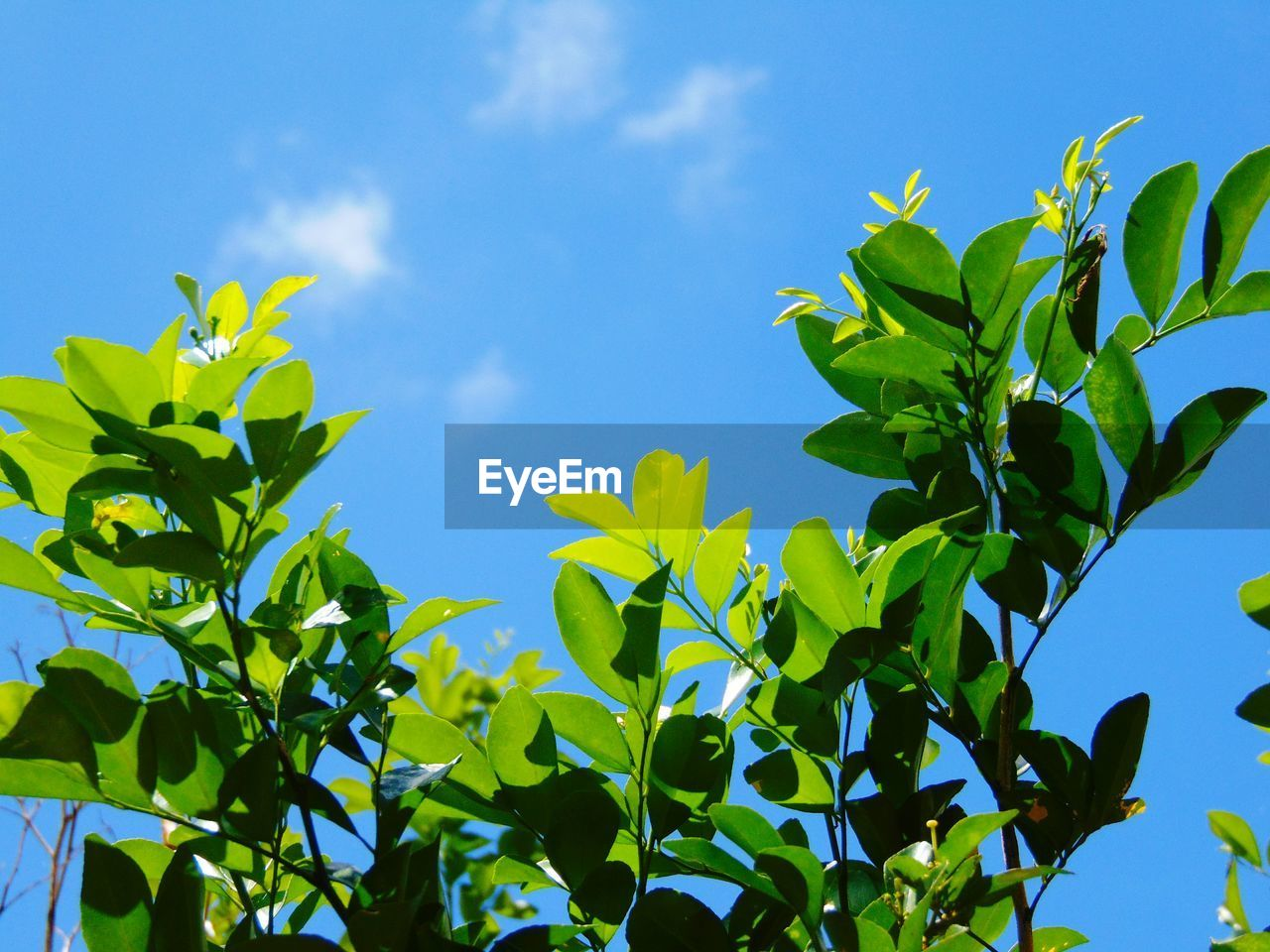 LOW ANGLE VIEW OF FRESH GREEN PLANTS AGAINST BLUE SKY