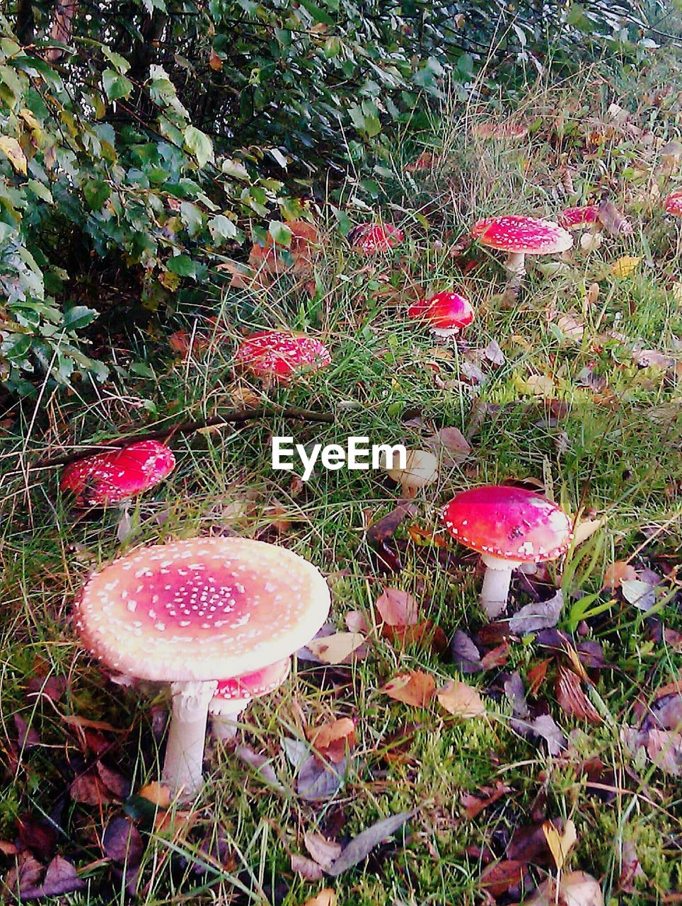 mushroom, growth, fungus, nature, toadstool, beauty in nature, fly agaric mushroom, grass, red, outdoors, day, field, no people, fragility, fly agaric, tranquility, close-up, freshness