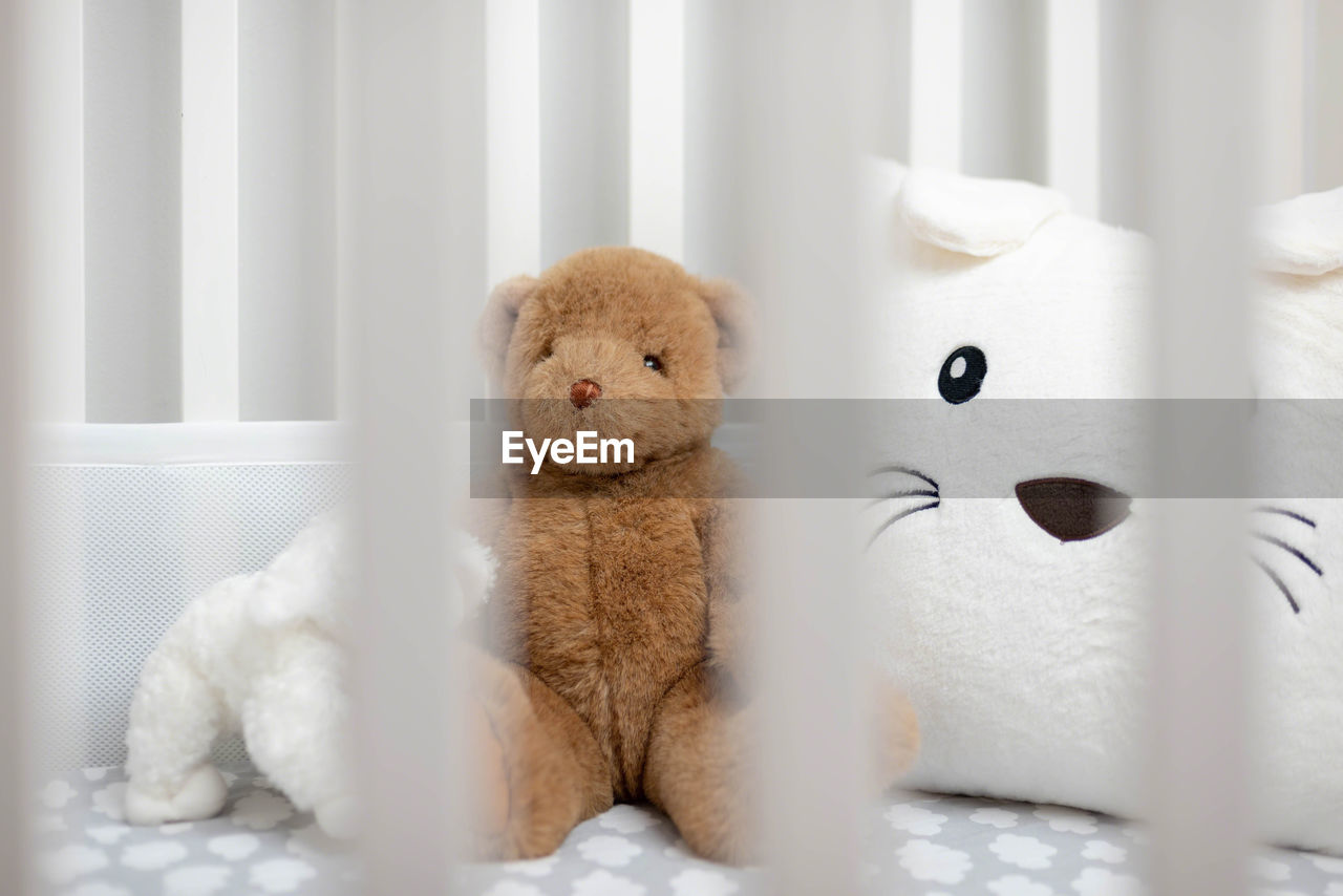 mammal, stuffed toy, white color, indoors, animal themes, no people, animal, animal representation, toy, teddy bear, pets, one animal, domestic, domestic animals, vertebrate, representation, softness, close-up, cute, home interior