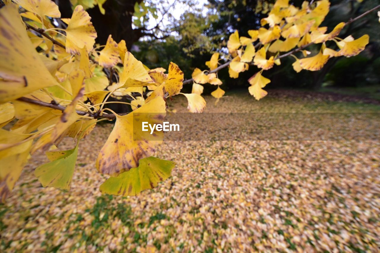 autumn, nature, growth, fragility, leaf, tree, beauty in nature, outdoors, day, flower, yellow, change, no people, plant, petal, branch, tranquility, close-up, springtime, freshness, flower head