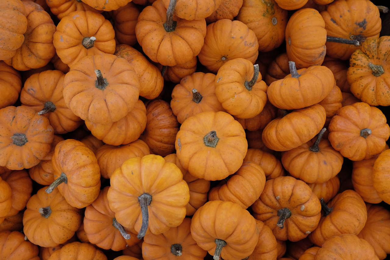 FULL FRAME SHOT OF PUMPKINS IN MARKET