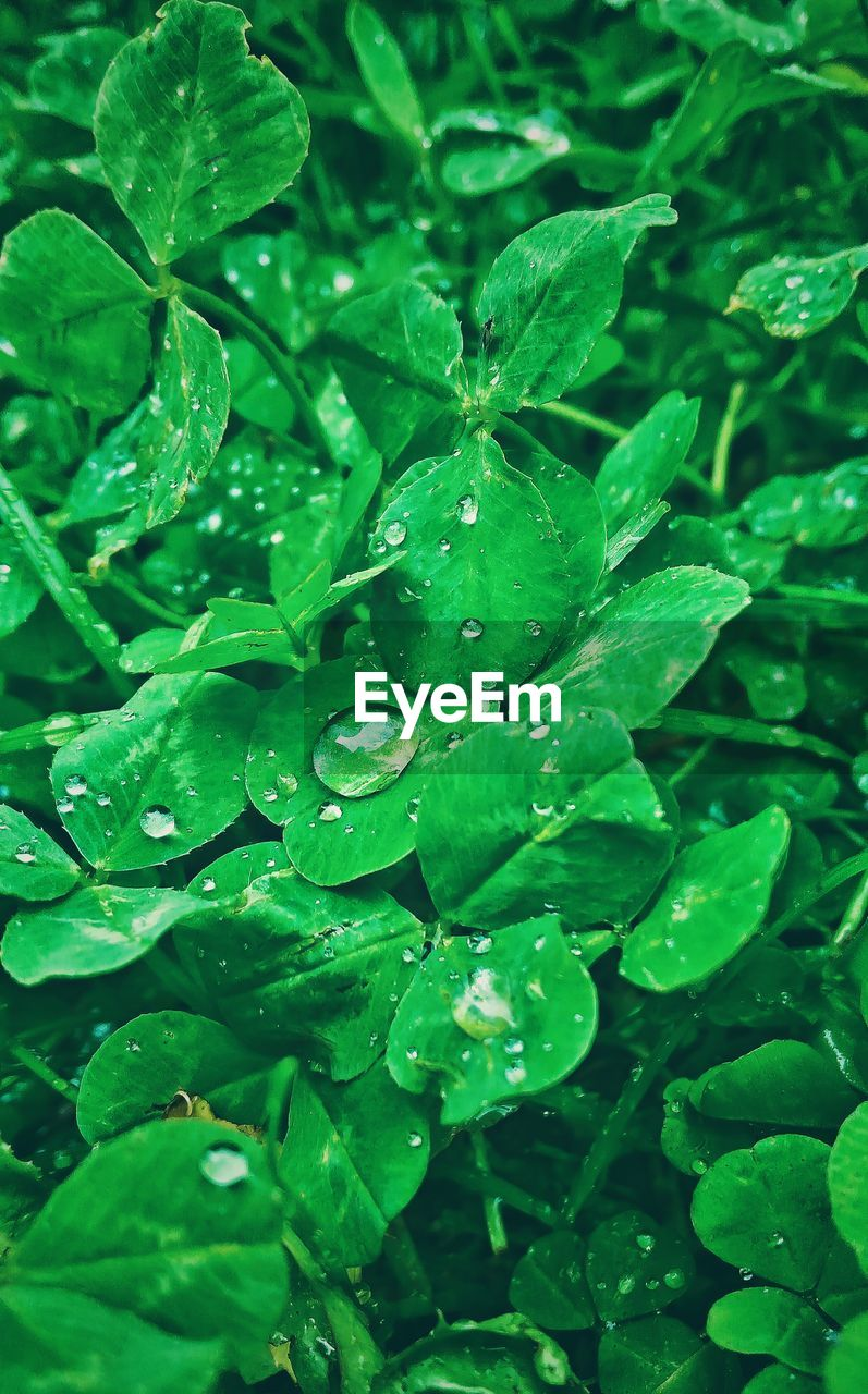 drop, green color, leaf, water, wet, nature, freshness, growth, beauty in nature, raindrop, plant, no people, day, close-up, outdoors, fragility, purity