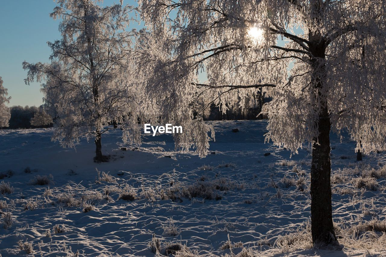 winter, cold temperature, tree, snow, nature, no people, beauty in nature, tranquility, outdoors, tranquil scene, bare tree, day, landscape, scenics, water, sky, branch