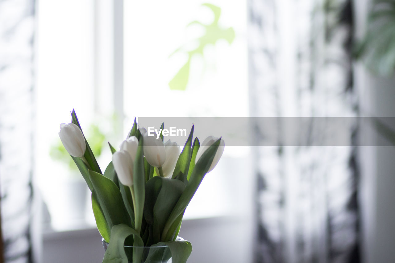 plant, freshness, flower, close-up, beauty in nature, vulnerability, flowering plant, window, nature, growth, fragility, no people, focus on foreground, green color, day, plant part, white color, leaf, petal, indoors, flower head, houseplant, flower arrangement