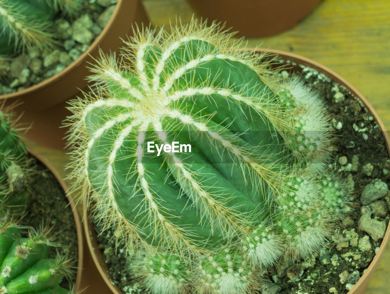 green color, growth, succulent plant, plant, close-up, cactus, no people, beauty in nature, nature, natural pattern, potted plant, day, high angle view, leaf, plant part, indoors, thorn, focus on foreground, pattern, botany, houseplant, turquoise colored