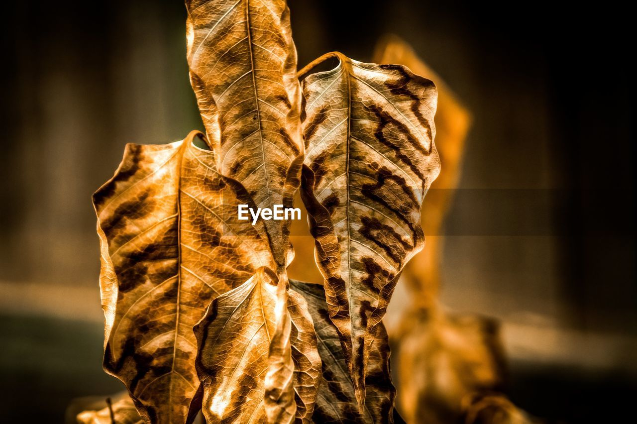 focus on foreground, close-up, dry, plant part, nature, no people, leaf, leaf vein, day, plant, autumn, vulnerability, fragility, brown, selective focus, leaves, outdoors, change, beauty in nature, natural pattern, dried, dead plant, wilted plant, natural condition