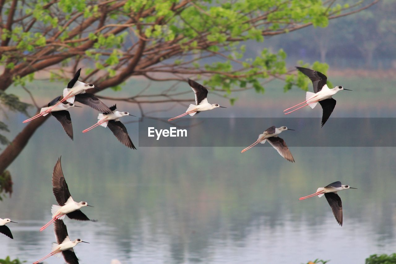 animal wildlife, animals in the wild, group of animals, bird, animal themes, vertebrate, spread wings, animal, flying, large group of animals, no people, nature, water, day, mid-air, beauty in nature, flock of birds, focus on foreground, tree