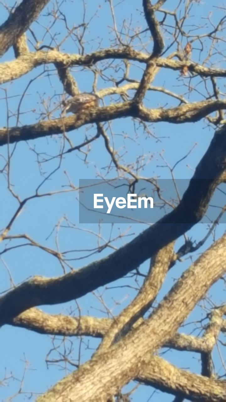 tree, nature, branch, outdoors, day, no people, growth, beauty in nature, low angle view, sky, close-up