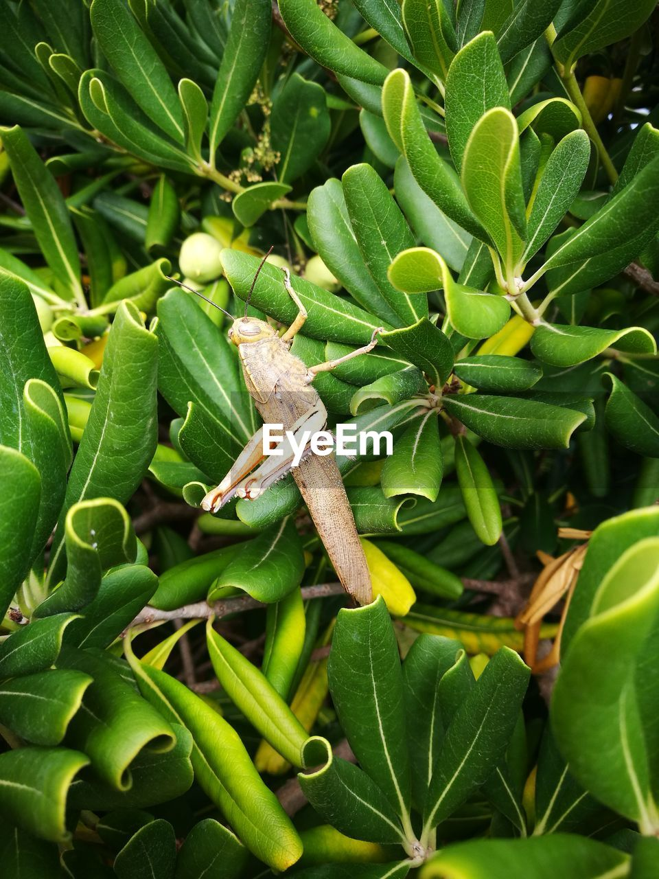 green color, leaf, plant part, plant, growth, close-up, animals in the wild, animal wildlife, nature, day, animal themes, no people, animal, one animal, beauty in nature, insect, invertebrate, outdoors, focus on foreground, high angle view