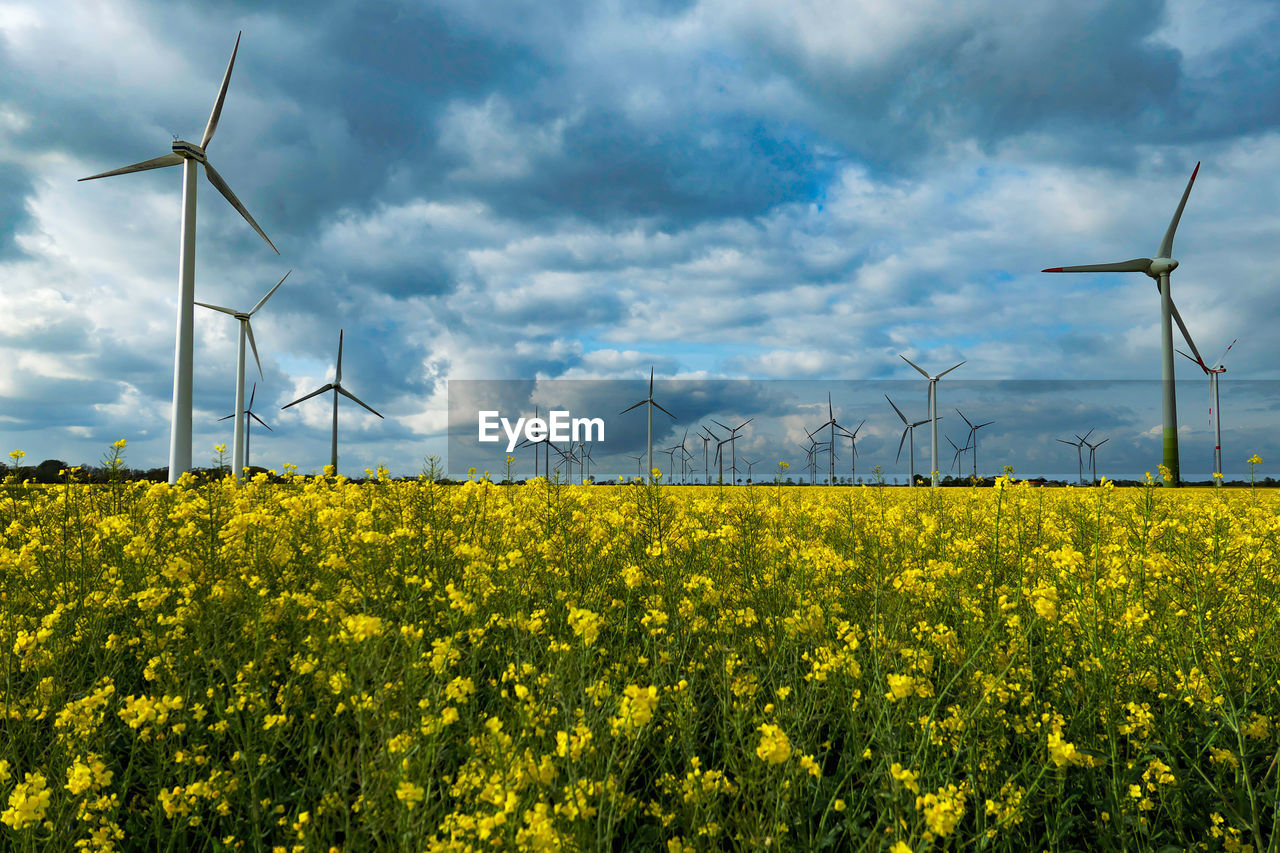 environment, fuel and power generation, turbine, wind turbine, environmental conservation, wind power, alternative energy, renewable energy, sky, landscape, flower, field, land, beauty in nature, rural scene, yellow, technology, nature, agriculture, flowering plant, no people, outdoors, power in nature, sustainable resources, power supply