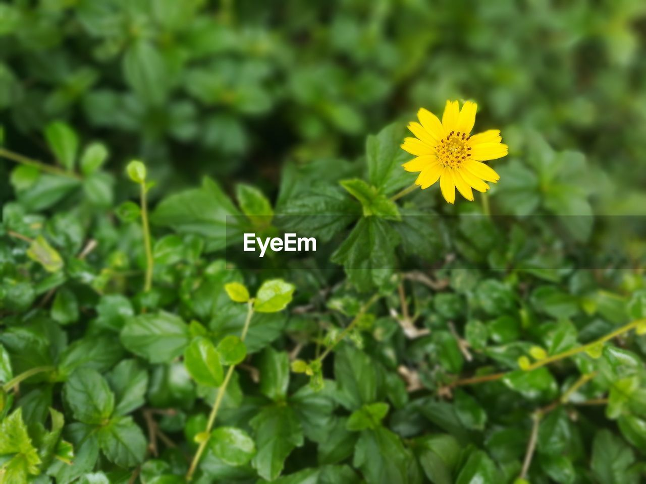 plant, flowering plant, flower, freshness, fragility, beauty in nature, growth, vulnerability, yellow, green color, nature, inflorescence, flower head, close-up, plant part, leaf, petal, selective focus, day, outdoors, no people