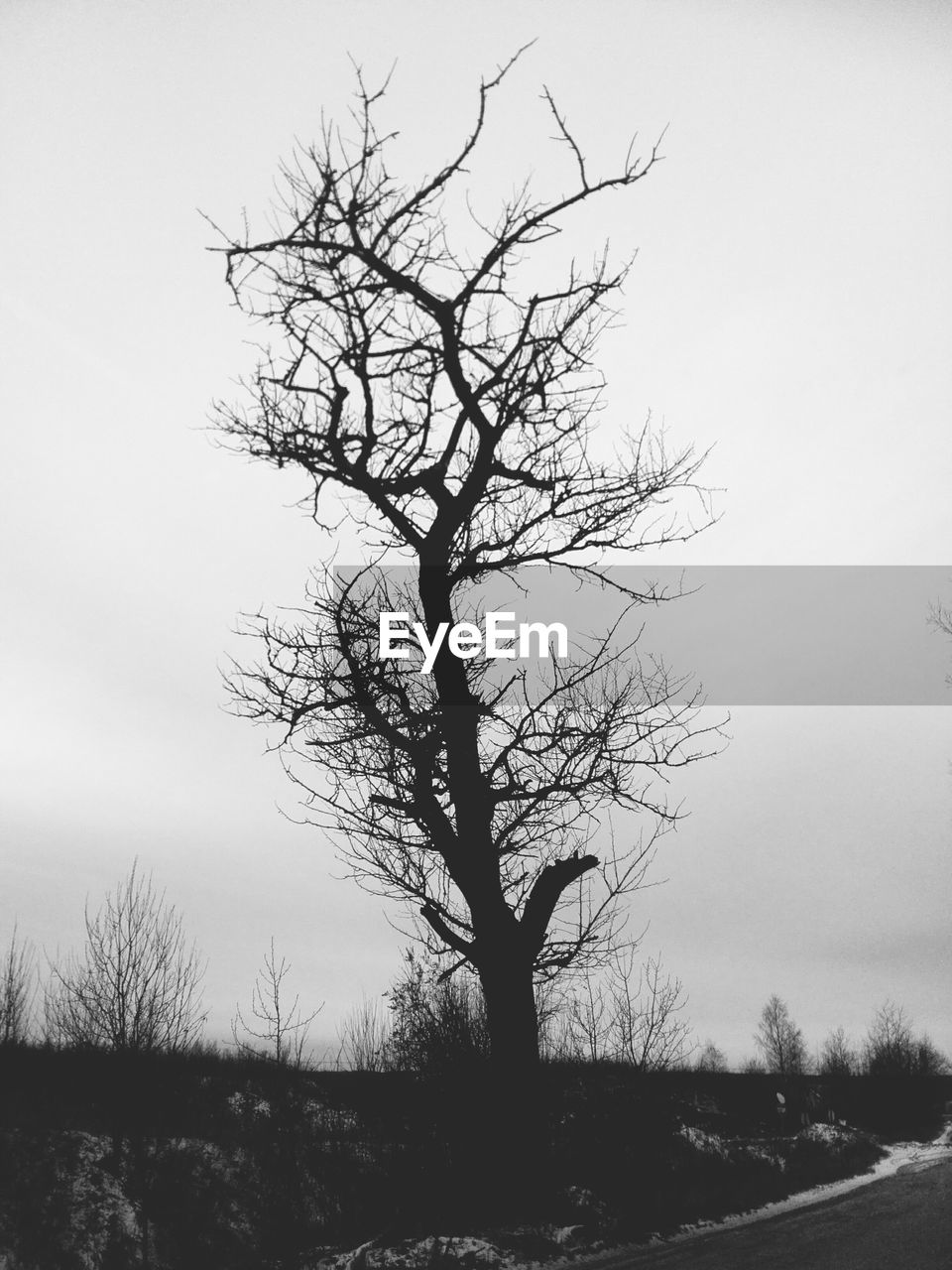 SILHOUETTE OF BARE TREE ON FIELD AGAINST SKY