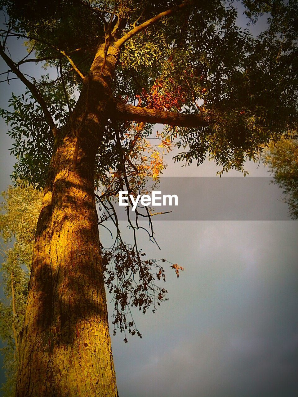 tree, nature, growth, tranquility, autumn, tranquil scene, tree trunk, low angle view, beauty in nature, outdoors, no people, scenics, day, branch, forest, sky
