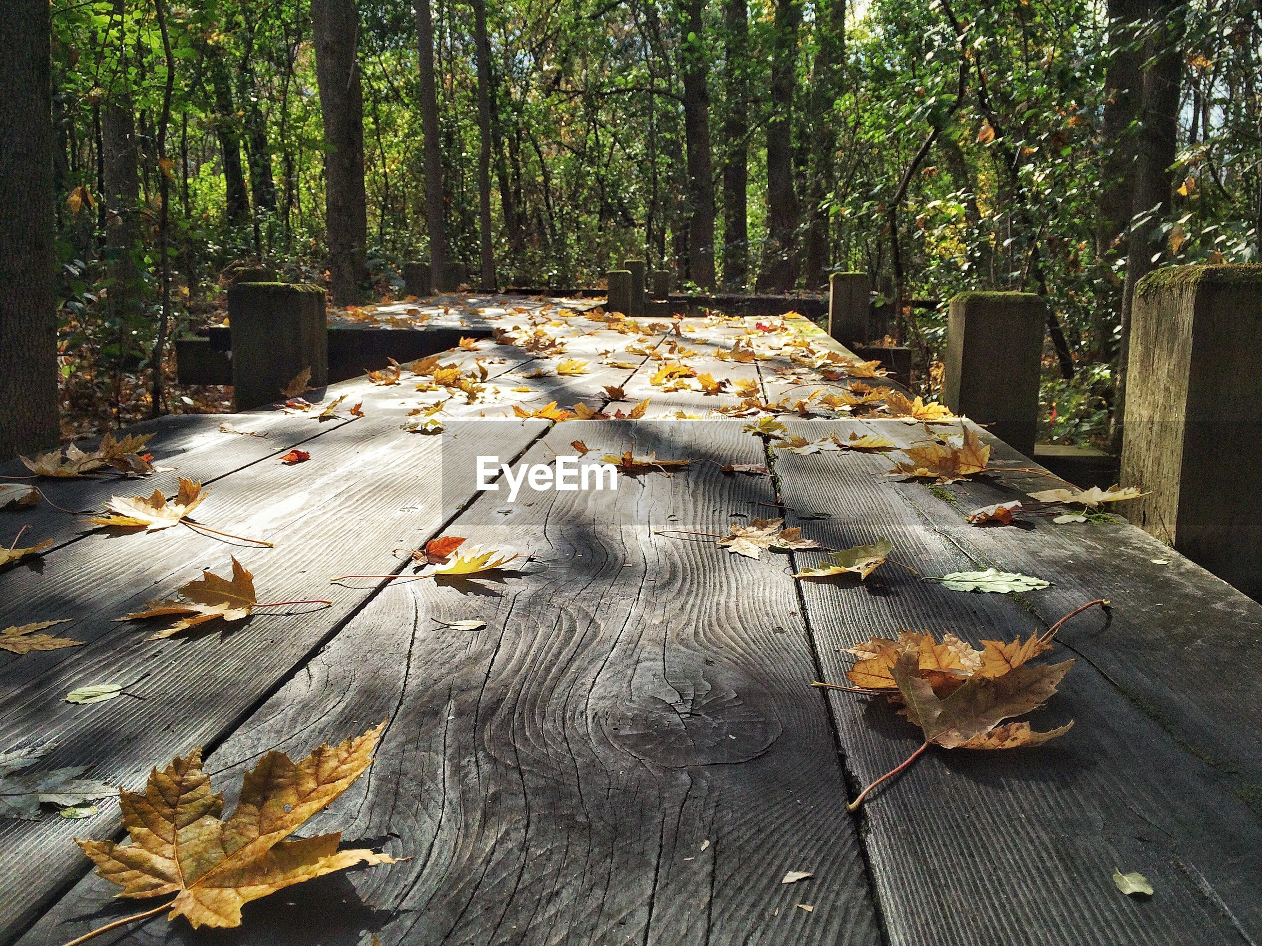Dry leaves on boardwalk amidst trees at forest