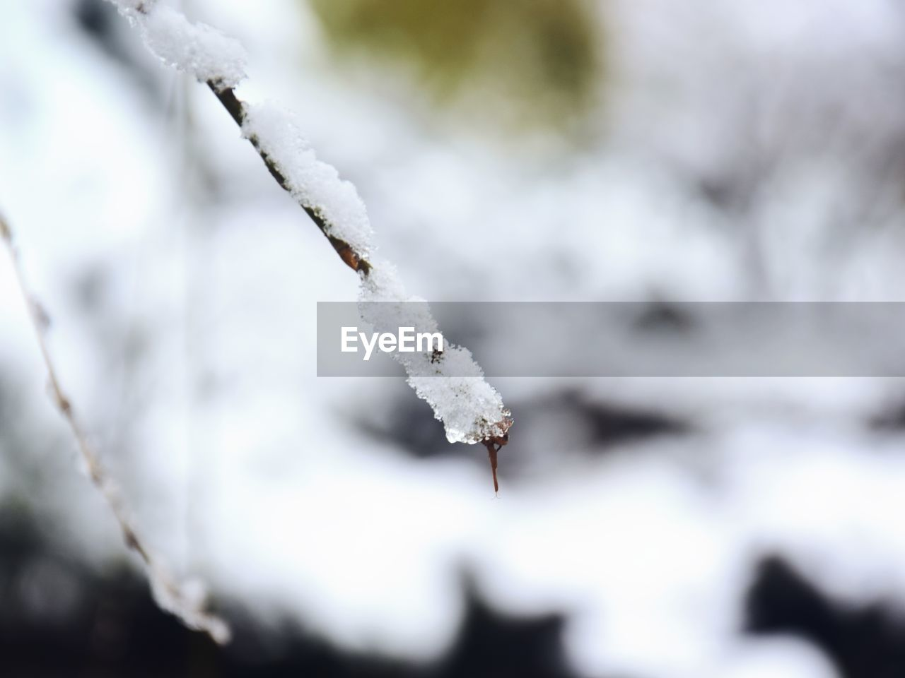 cold temperature, winter, snow, frozen, ice, focus on foreground, close-up, day, nature, plant, white color, no people, beauty in nature, frost, twig, selective focus, outdoors, tranquility, covering, blizzard, powder snow