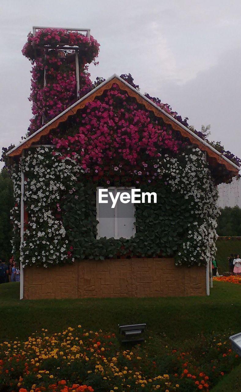 Pink Flowers Against Built Structure