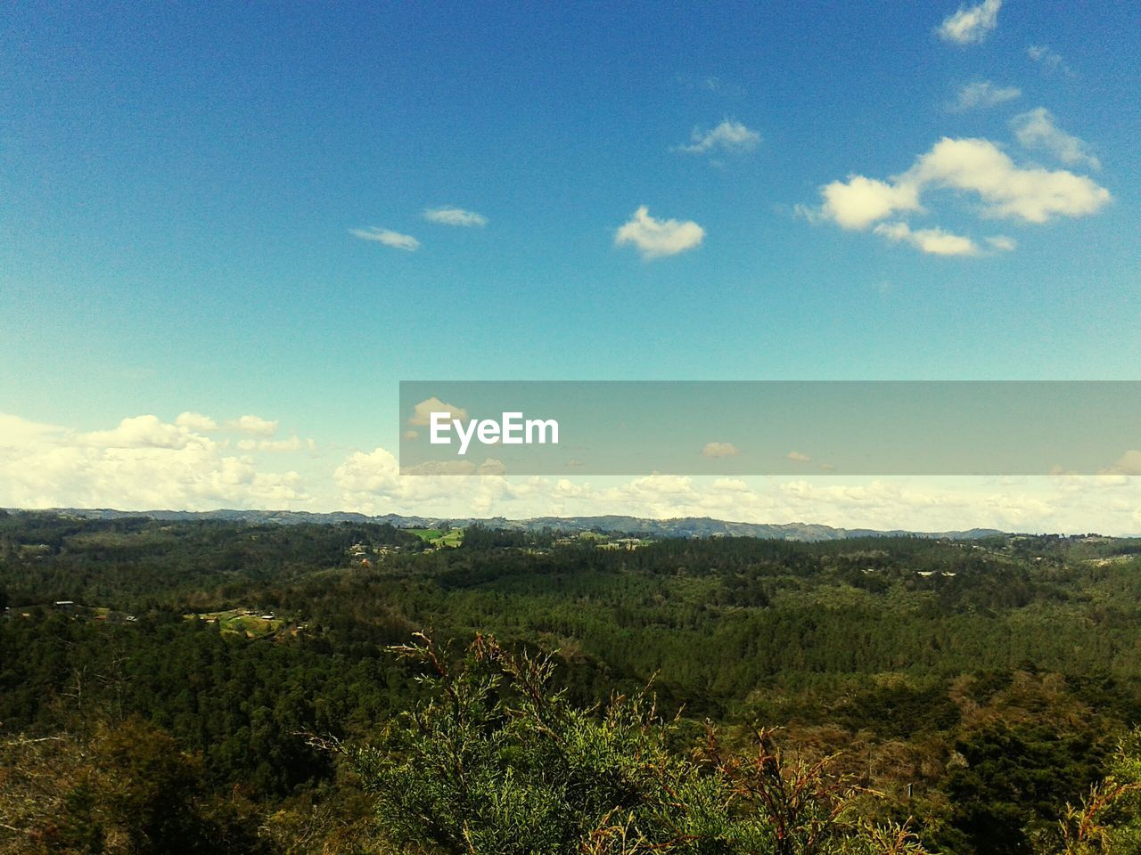 sky, beauty in nature, cloud - sky, tranquility, environment, scenics - nature, tranquil scene, landscape, nature, plant, tree, no people, non-urban scene, growth, day, land, mountain, outdoors, idyllic, green color