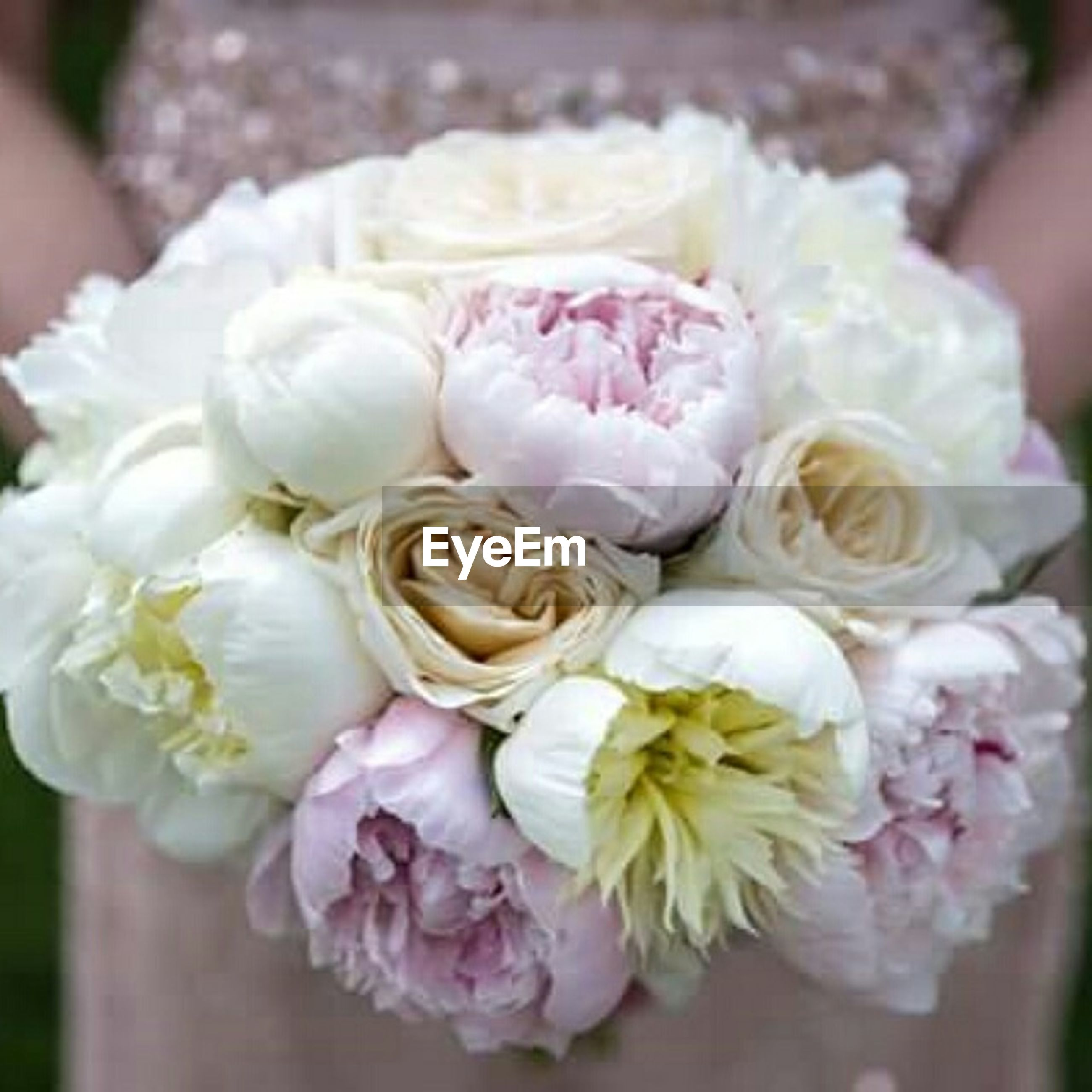 flower, freshness, petal, fragility, flower head, close-up, beauty in nature, pink color, rose - flower, indoors, bouquet, focus on foreground, bunch of flowers, white color, nature, growth, blooming, selective focus, blossom, botany