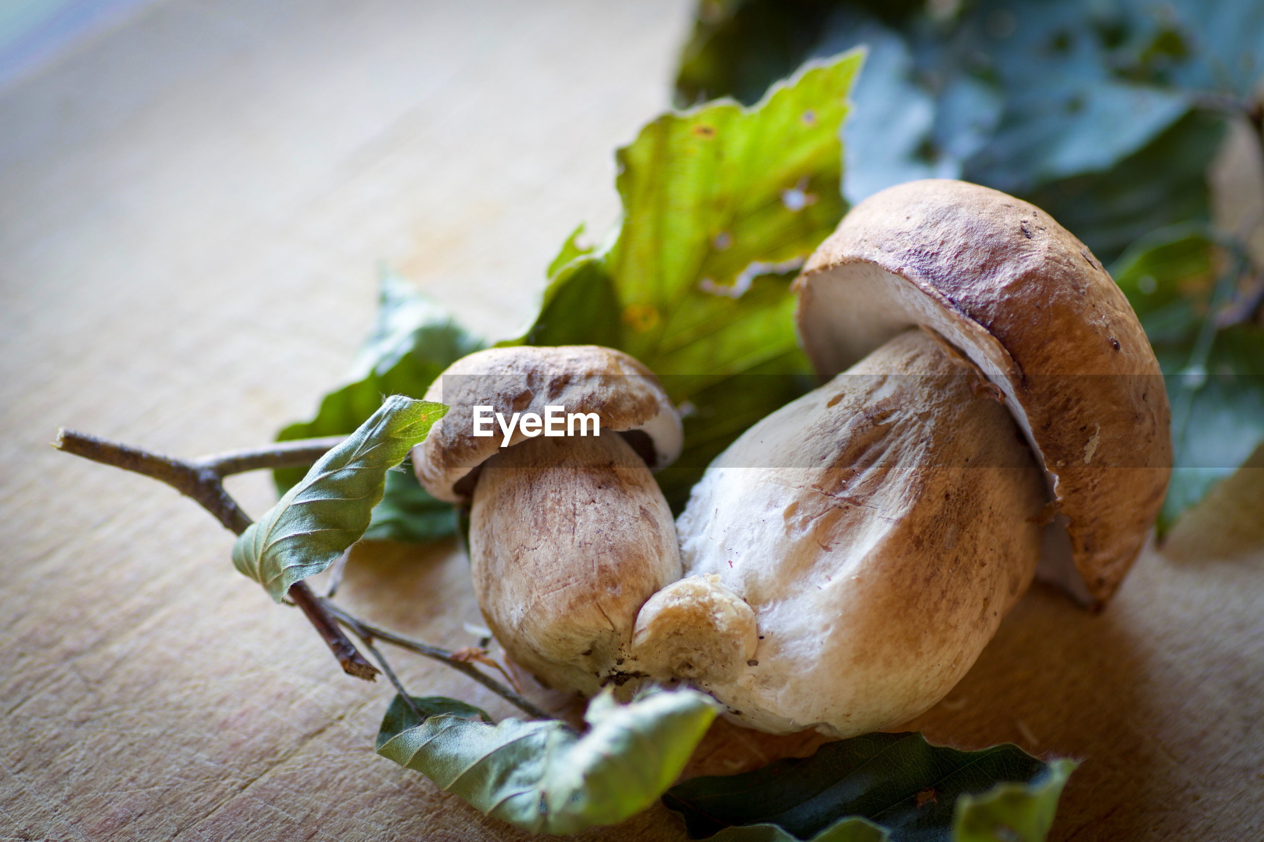 Close-up of edible mushrooms on table