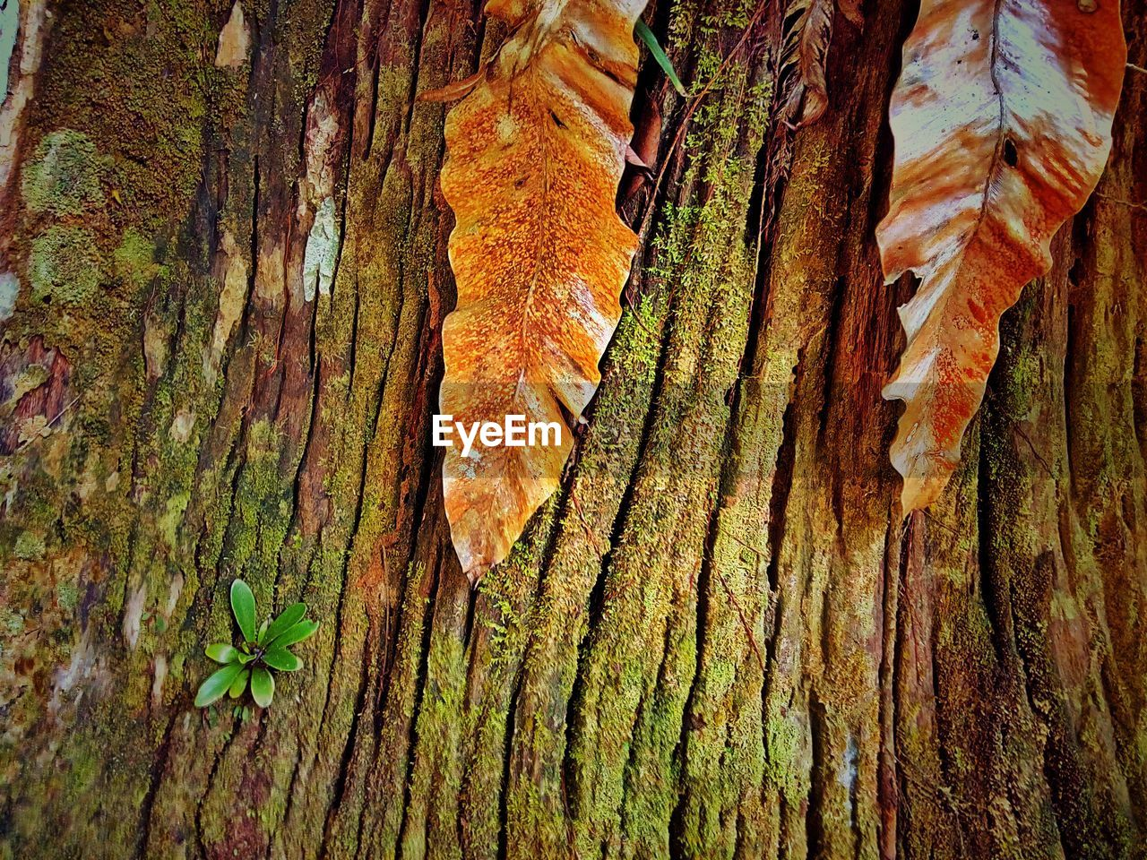 tree trunk, trunk, plant, tree, growth, textured, nature, no people, close-up, full frame, beauty in nature, day, rough, pattern, backgrounds, outdoors, plant bark, natural pattern, brown, bark, lichen
