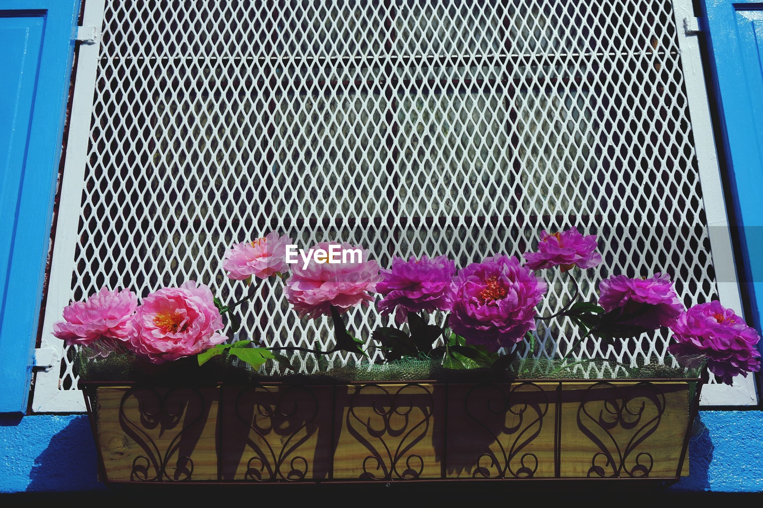 Close-up of flowers growing on window box