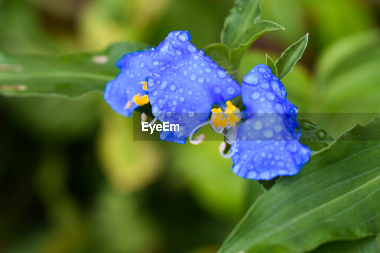 nature, flower, beauty in nature, drop, growth, plant, fragility, green color, petal, leaf, freshness, outdoors, wet, day, no people, focus on foreground, close-up, flower head, one animal, blooming, water, animal themes